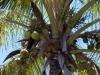 photo-mauritius-flora-and-fauna-1