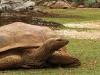 la-vanille-crocodiles-park