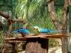 casela-mauritius-park